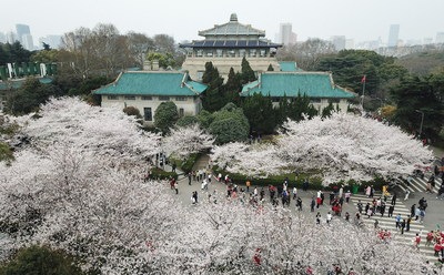 Flores de cerezo en Wuhan (PRNewsfoto/The Publicity Department of Wuhan Municipality)